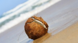 Coconuts Wallpaper For PC