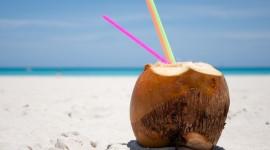 Coconuts Wallpaper HQ