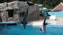 Dolphins Best Wallpaper