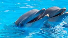 Dolphins Desktop Wallpaper