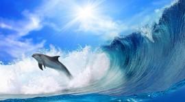 Dolphins Desktop Wallpaper For PC