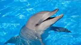 Dolphins Desktop Wallpaper Free