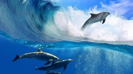 Dolphins Wallpaper Download