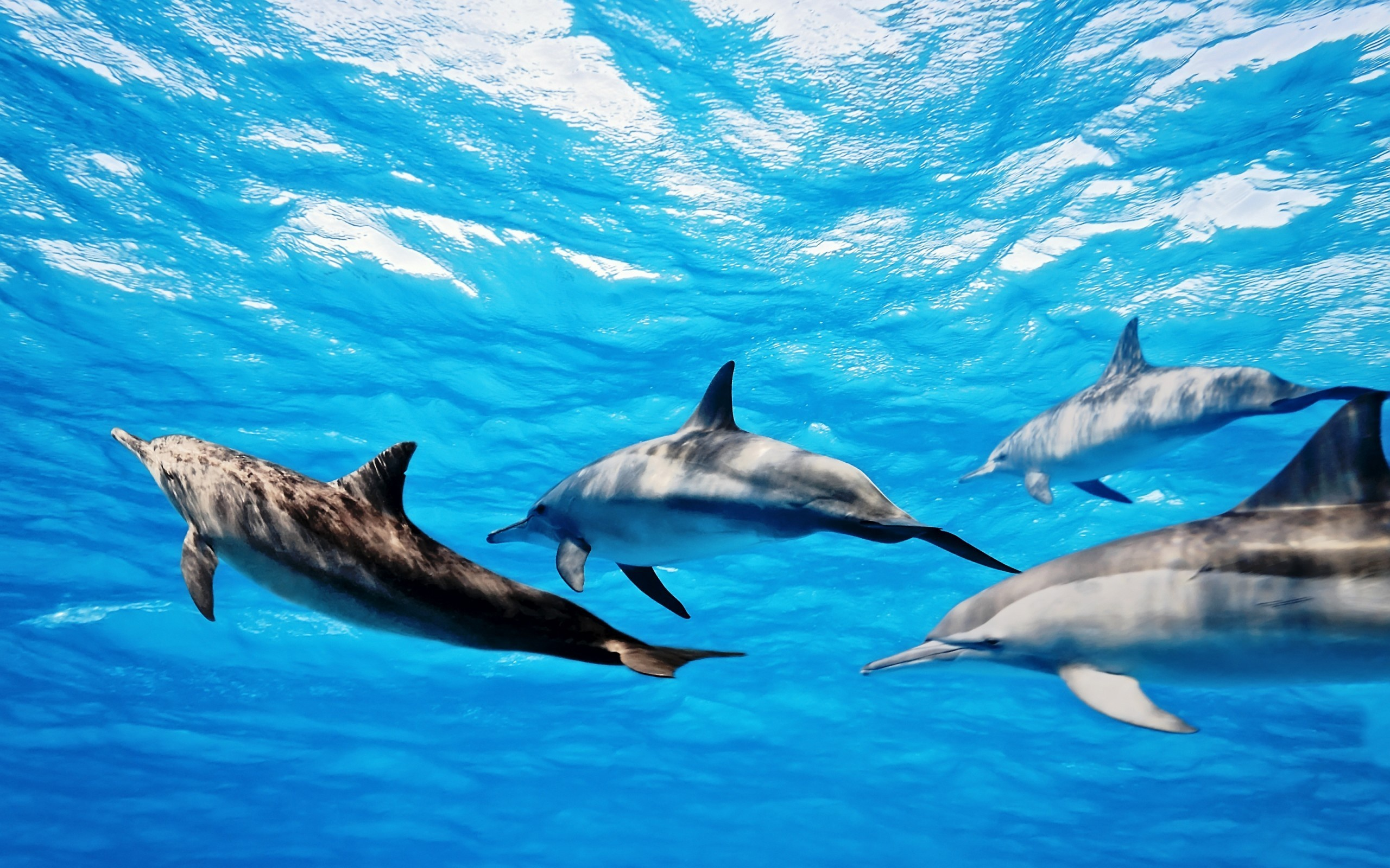 Dolphins wallpapers high definition wallpapers cool nature - Dolphins Wallpapers High Definition Wallpapers Cool Nature 47