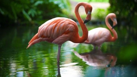 Flamingo wallpapers high quality