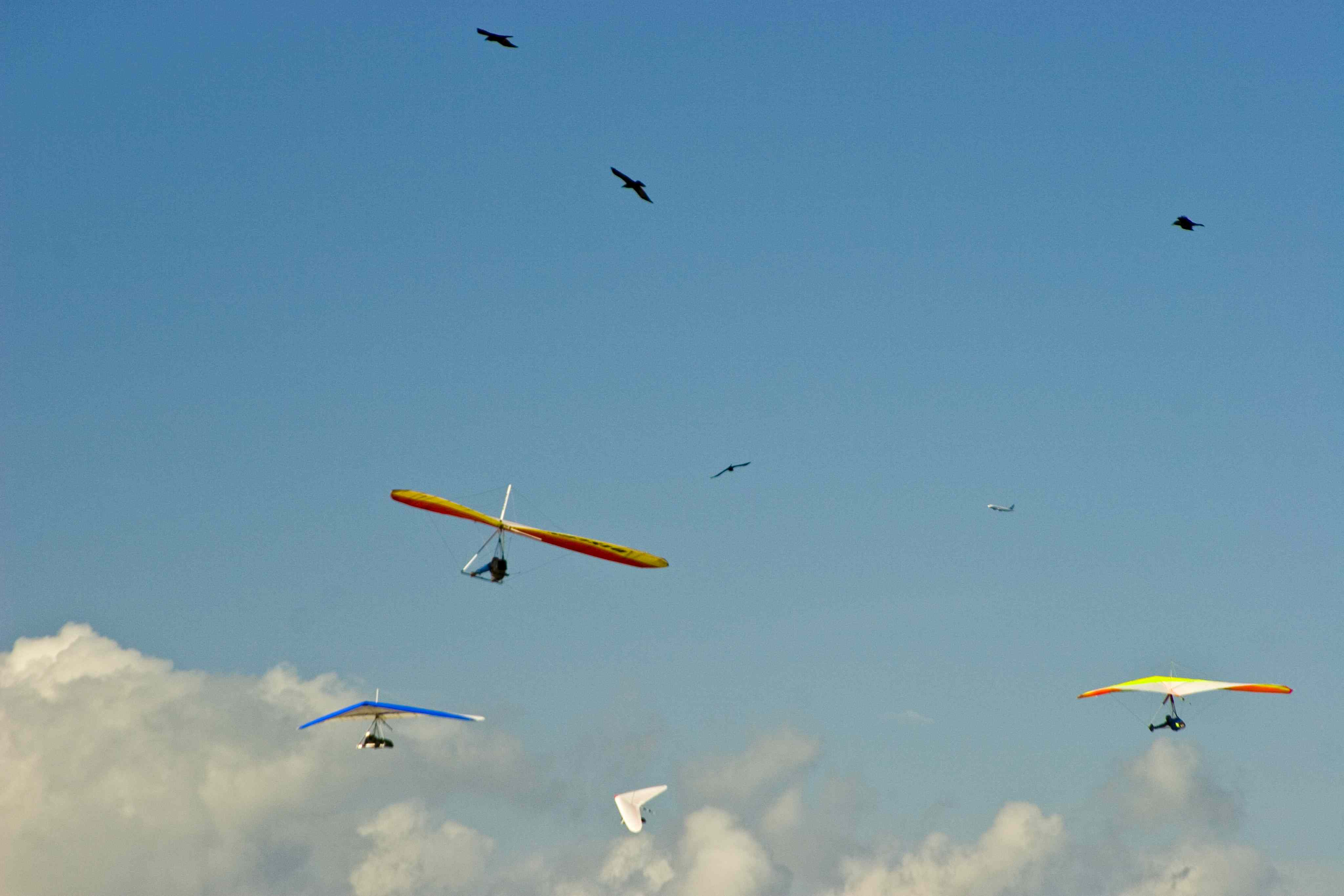 an analysis of fanthropes poems hang gliders in january horticultural show and soothing and awful