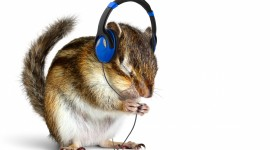 Headphones and Animals Best Wallpaper