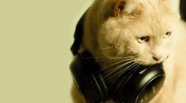 Headphones and Animals Photo