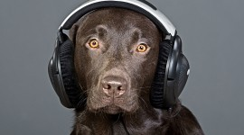Headphones and Animals Photo Download