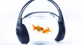 Headphones and Animals Photo Free