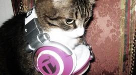 Headphones and Animals Photo#2