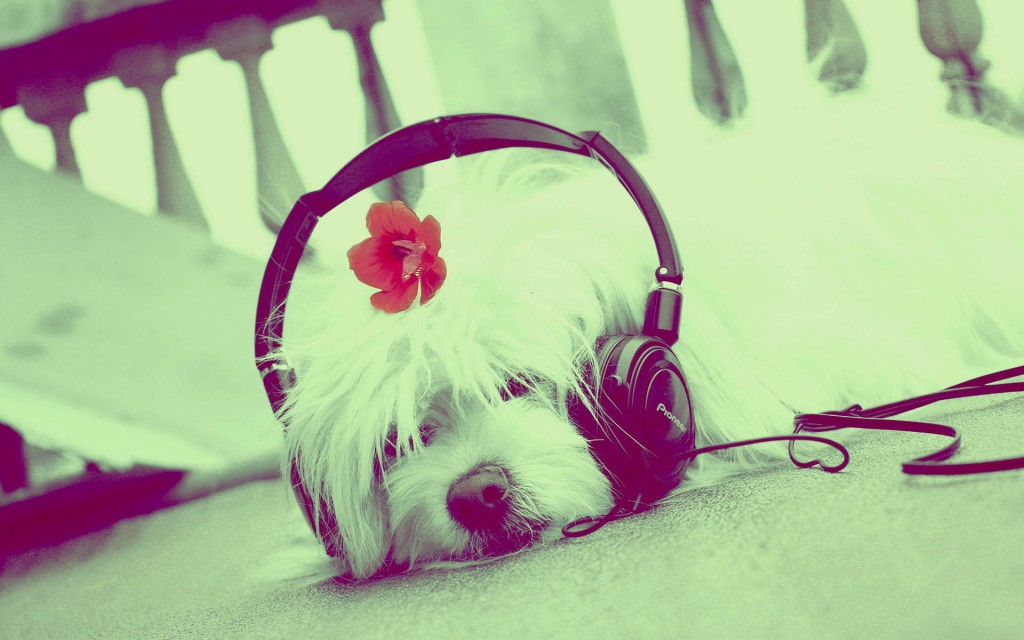Headphones and Animals wallpapers HD