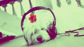 Headphones and Animals Wallpaper