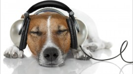 Headphones and Animals Wallpaper Download