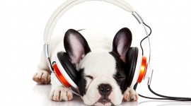 Headphones and Animals Wallpaper Free