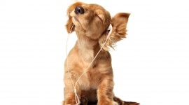 Headphones and Animals Wallpaper Full HD