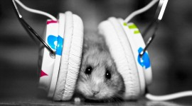 Headphones and Animals Wallpaper HQ