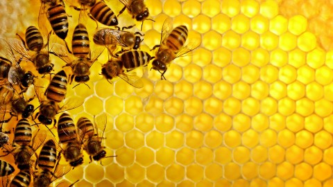 Honey wallpapers high quality