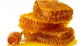 Honey Wallpaper Download Free