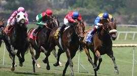 Horse Racing Wallpaper Download