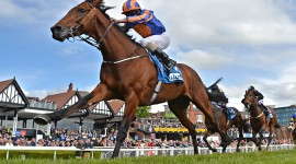 Horse Racing Wallpaper Download Free