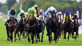 Horse Racing Wallpaper Free
