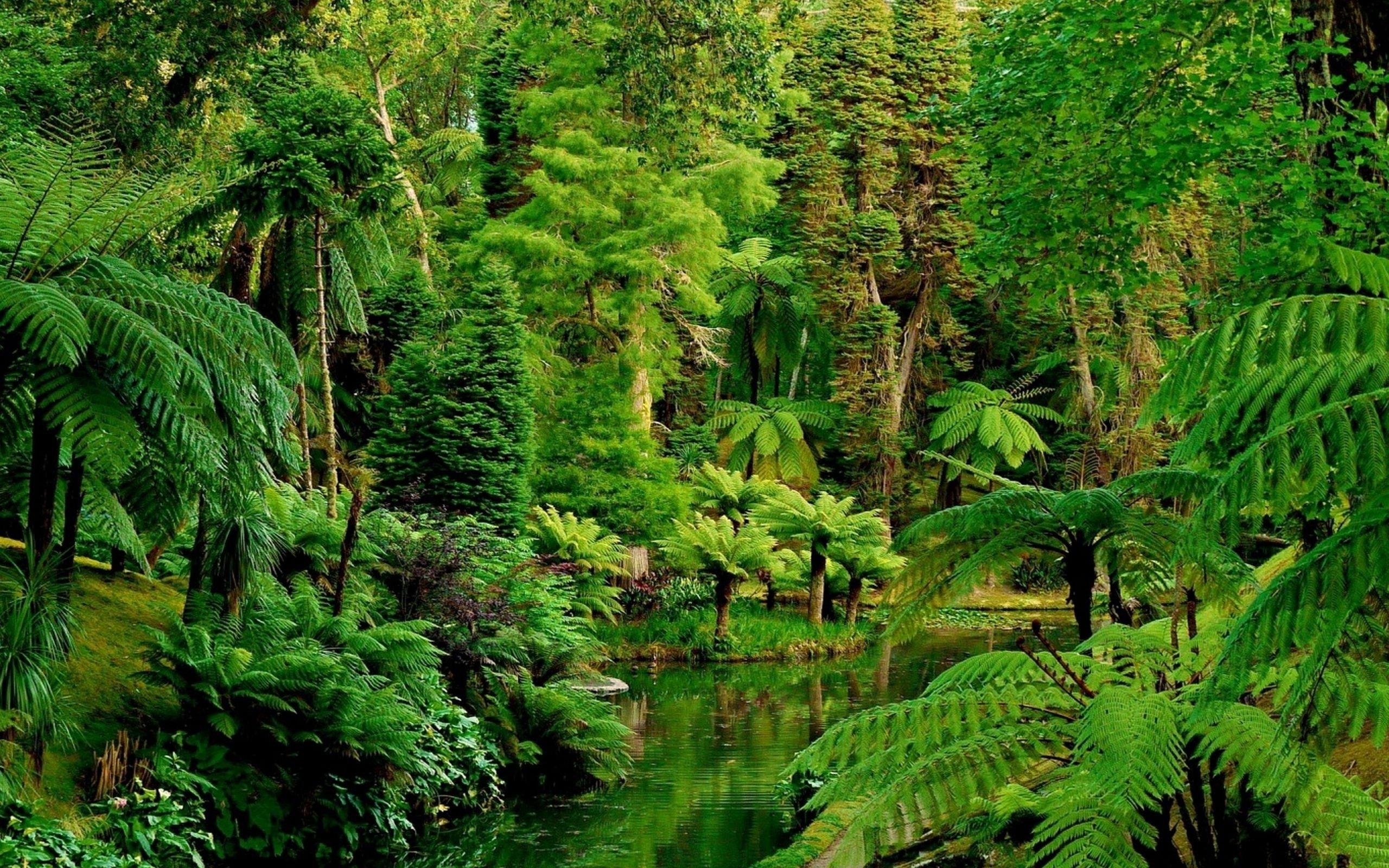 Cool Wallpaper High Quality Forest - Jungle-Desktop-Wallpaper-HD  You Should Have_82766.jpg