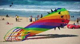 Kites Photo Download