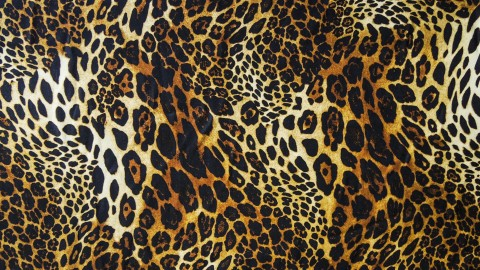 Leopard Print wallpapers high quality