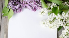 Lilac Wallpaper For PC