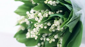 Lily Of The Valley Wallpaper Download