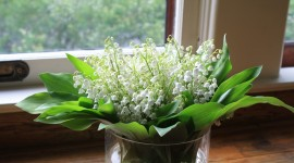 Lily Of The Valley Wallpaper Download Free