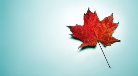 Maple Leaf High Quality Wallpaper