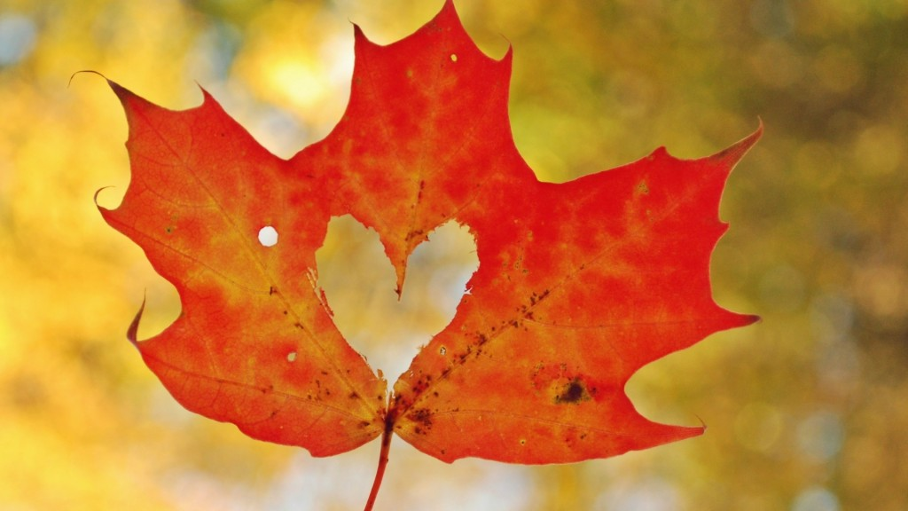 Maple Leaf wallpapers HD