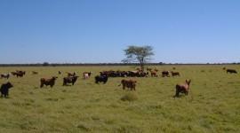 Paraguaya Photo