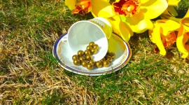 Pearls Photo Free