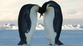 Penguins Desktop Wallpaper For PC
