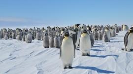 Penguins Desktop Wallpaper Free