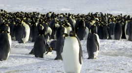 Penguins Desktop Wallpaper HD