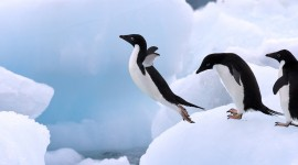Penguins Desktop Wallpaper HQ