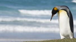 Penguins Wallpaper Download