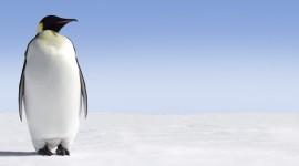 Penguins Wallpaper Download Free