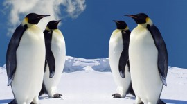 Penguins Wallpaper For Desktop