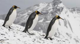 Penguins Wallpaper For PC