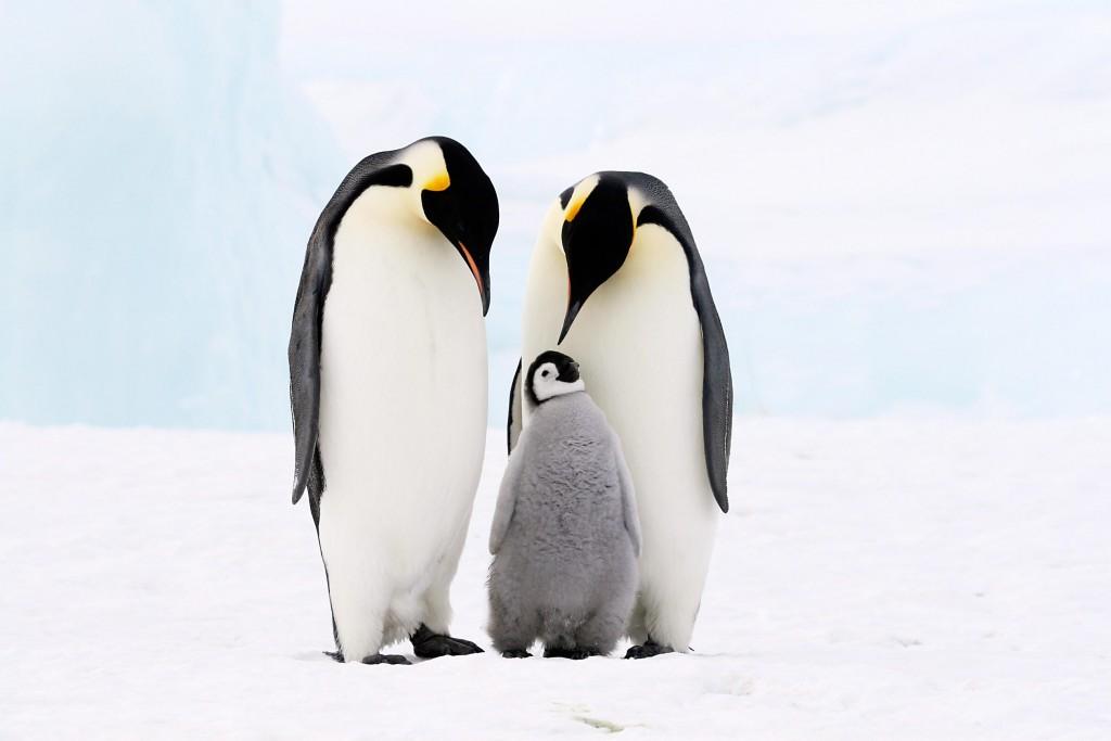Penguins wallpapers HD