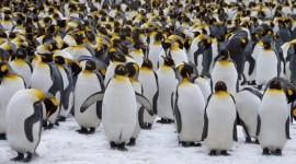 Penguins Wallpaper HD
