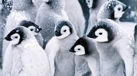 Penguins Wallpaper HQ