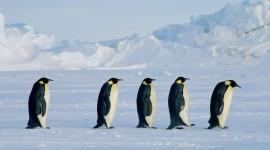 Penguins Wallpaper High Definition