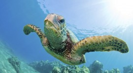 Sea Turtles Best Wallpaper