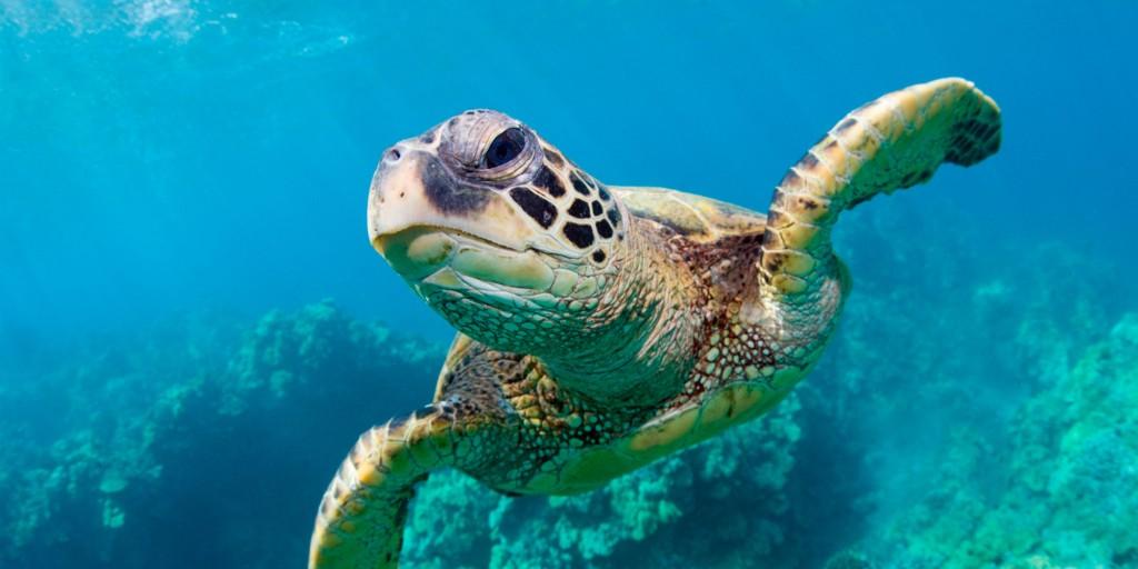 Sea Turtles wallpapers HD